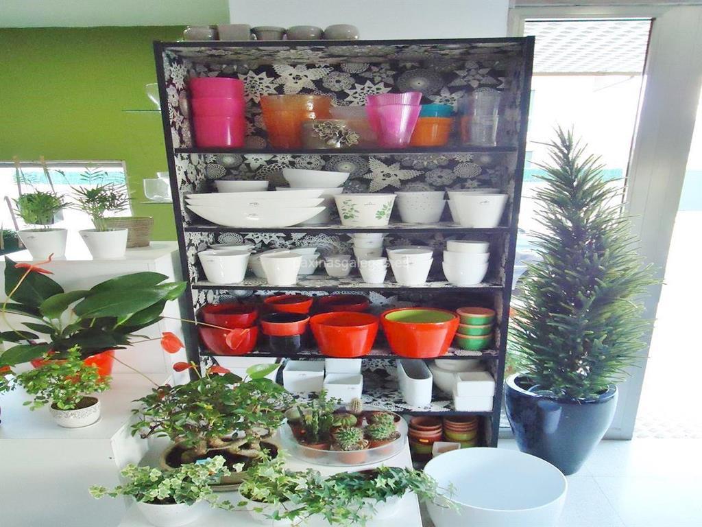 Bascapi florister as vigo manuel cominges 15 for Viveros de plantas en vigo