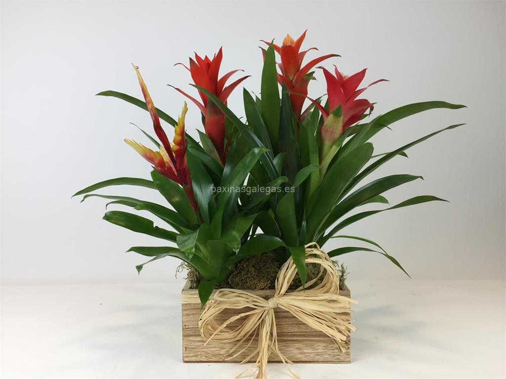 Galer a tienda jard n teleflora vigo for Viveros de plantas en vigo